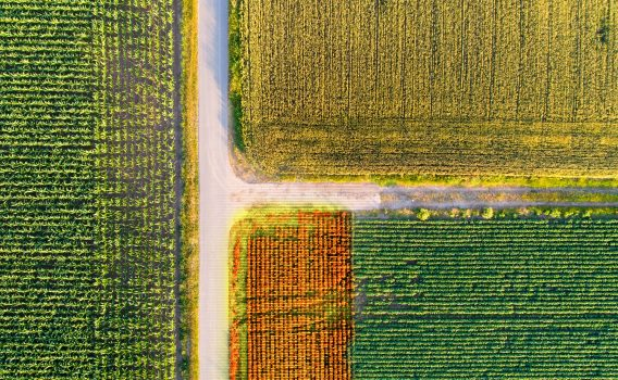 Limagrain and Alteia collaborate for technology-driven approach to phenotyping